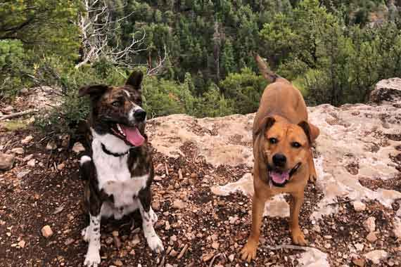 Favorite Dog-Friendly Trails