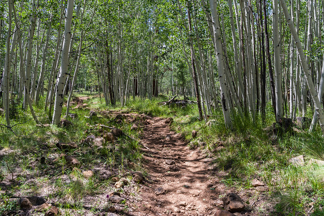 Weatherford Trail Flagstaff